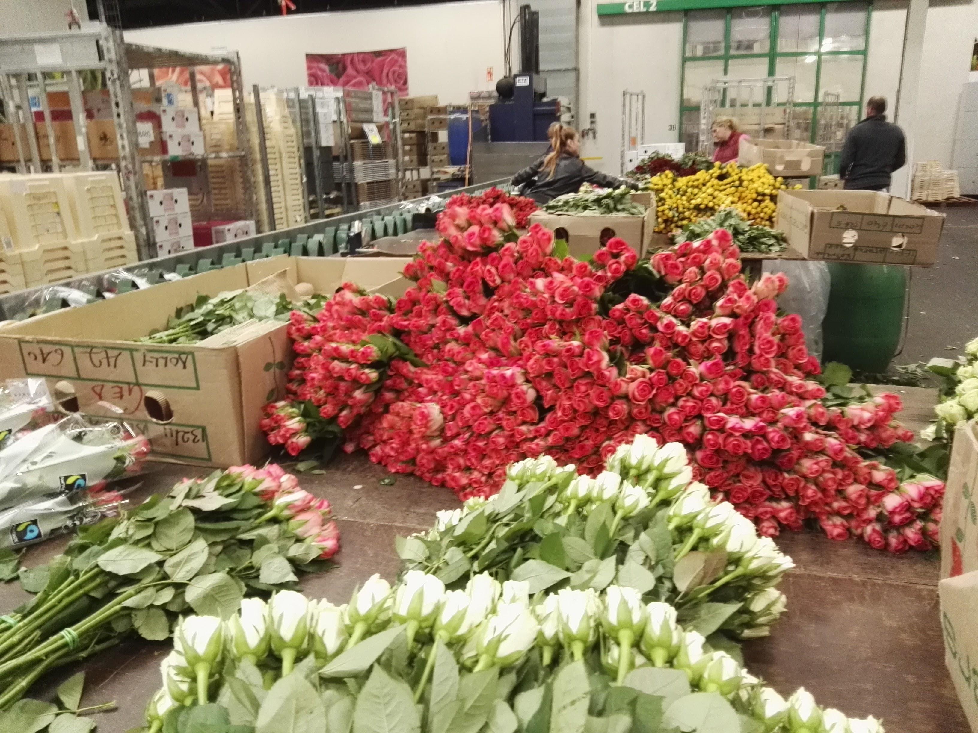 Ищем оптовых поставщиков цветов, рязани доставкой
