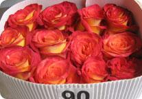 DAOFLOWERS - оптовые поставки цветов из Эквадора и Колумбии 2156c86d9c8a1